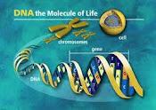 Ingenieria Genetica