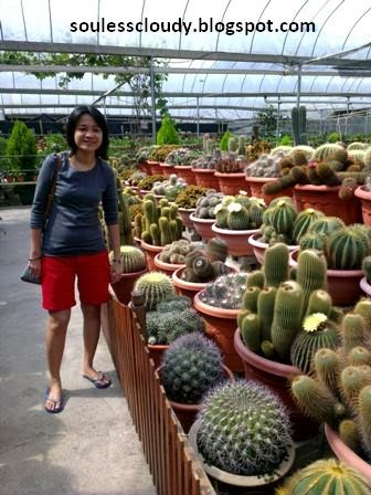 Cactus Point Brinchang