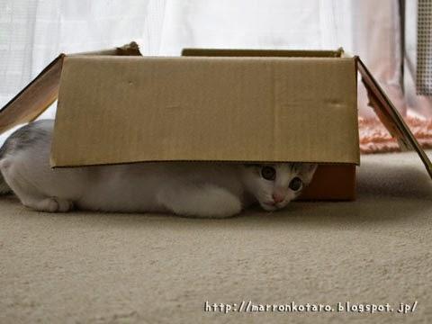 物陰から獲物を狙う仔猫