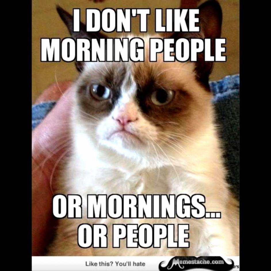 24127 funny grumpy cat memesvery bad morning meme 0rlh4r5c