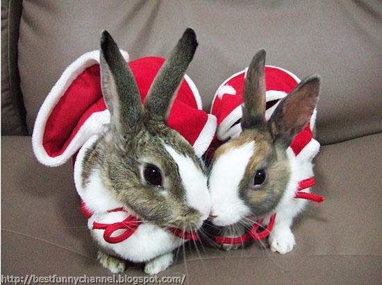 Christmas bunny.
