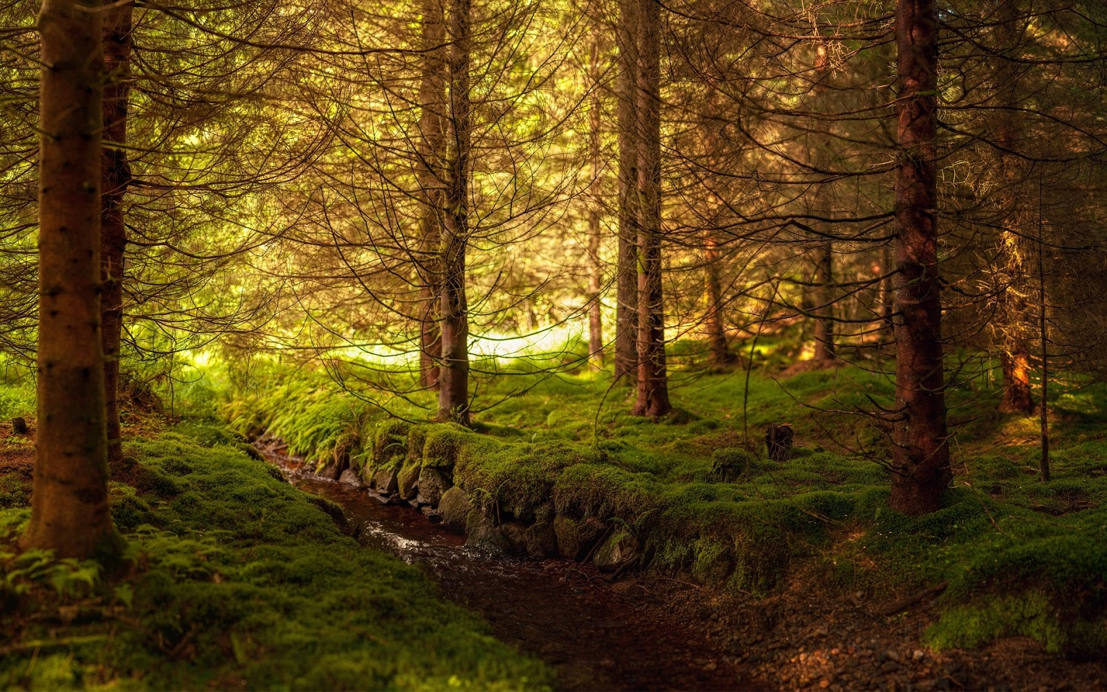 Een prachtige hd foto met een bos met een beekje en veel groene mos