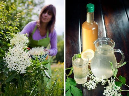 Harlands Organic Furnishings: Eat: Homemade elderflower cordial