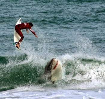 Classic Left Shark Blog