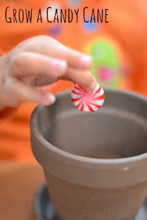 Grow a candy cane this holiday, and delight your little ones with the magic of the season.  My girls were in awe over this simple to set up MAGIC
