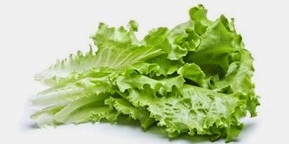 Image result for daun selada