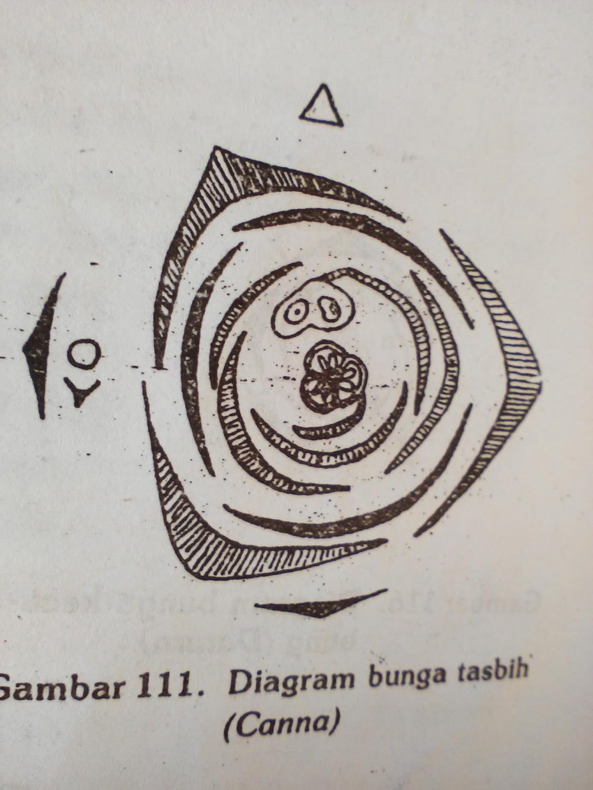 Morfologi tumbuhan suku cannaceae misalnya bunga tasbih canna indica ccuart Images