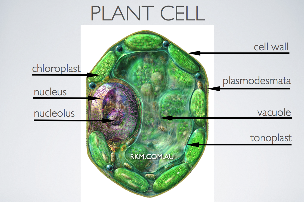 Plant Cell Microscope Labelled