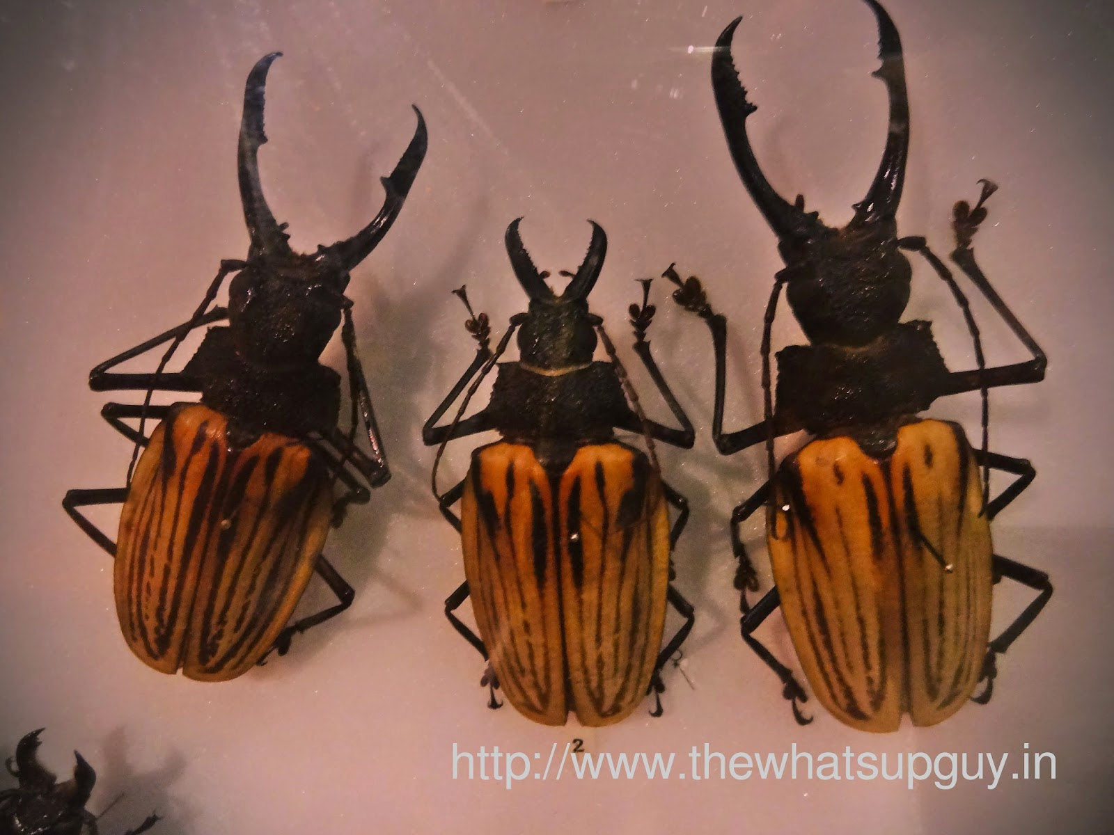 Melbourne Museum Beetles
