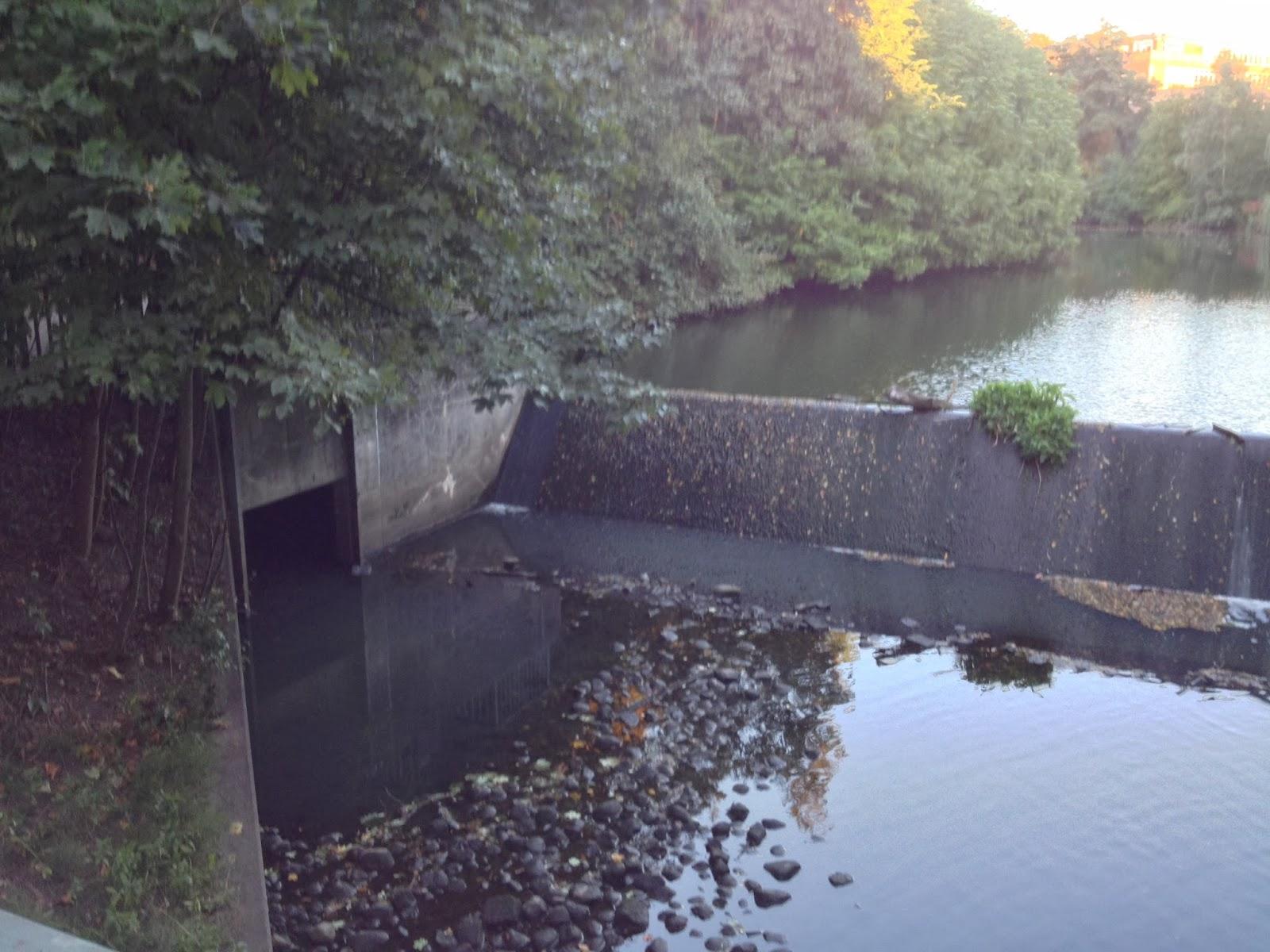 Teich, Büsche, Stauwehr