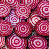 Chioggia Beets (Candy Cane)