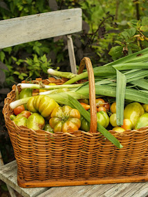 Grönsakerna har växt sig stora