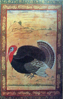 turkey cock from goa, painted by mansur
