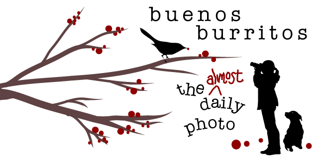 buenos burritos daily photo