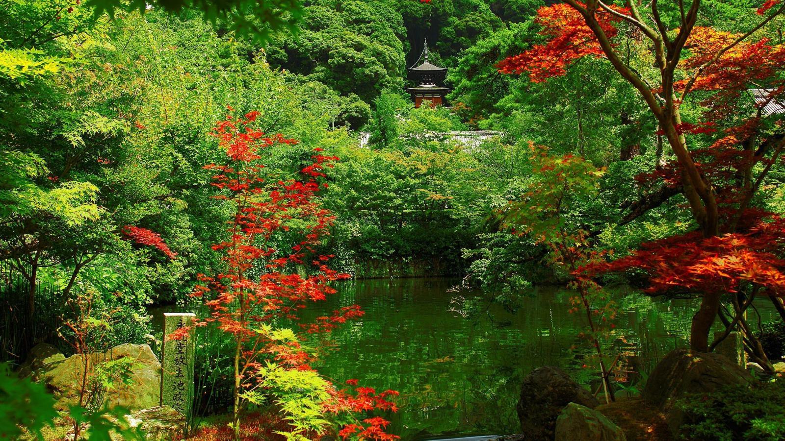 Осень в лесу картинки на рабочий стол