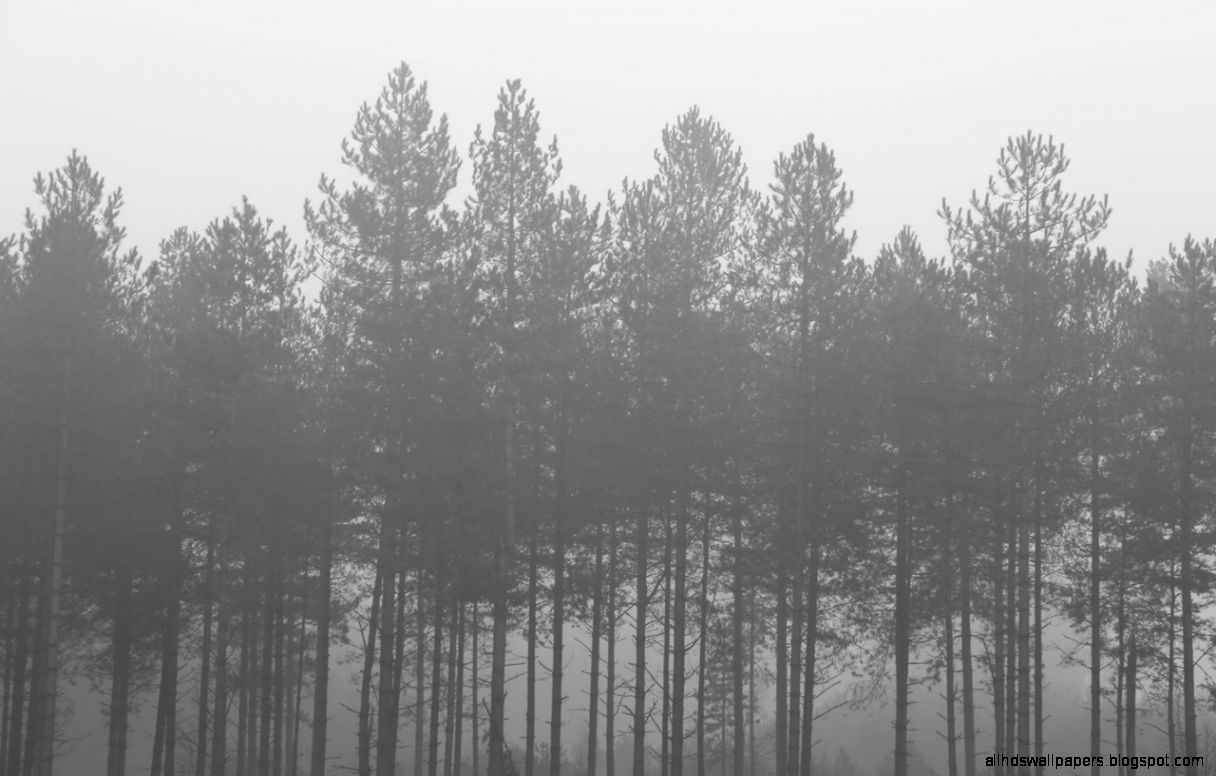 black and white nature trees forests fog wallpaper all