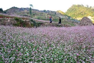 Dong Van plateau – Ha Giang - Vietnam