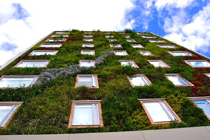 jardim vertical goiania:Jardim vertical é tendência
