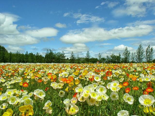 rosas no jardim de deus:no jardim sem cores no tempo dará flores se plantei chorando sorrindo