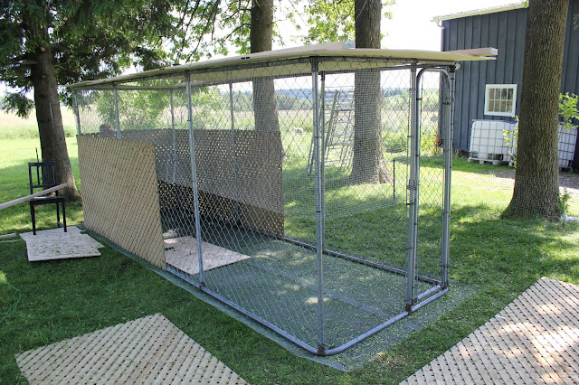 Can A Chain Link Dog Run Be Used For Goats