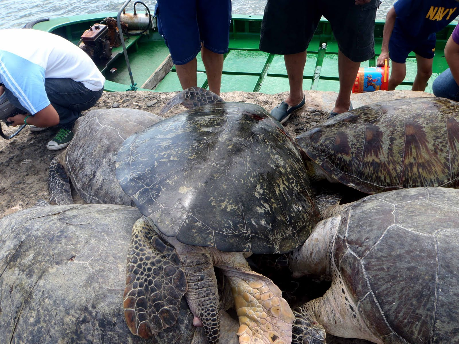 6%2BChinese%2Bcharged%2Bfor%2Bturtle%2Bcatch%2Bin%2BPhilippines%2B1-762555 - Philippine Turtles Stolen by China - Talk of the Town