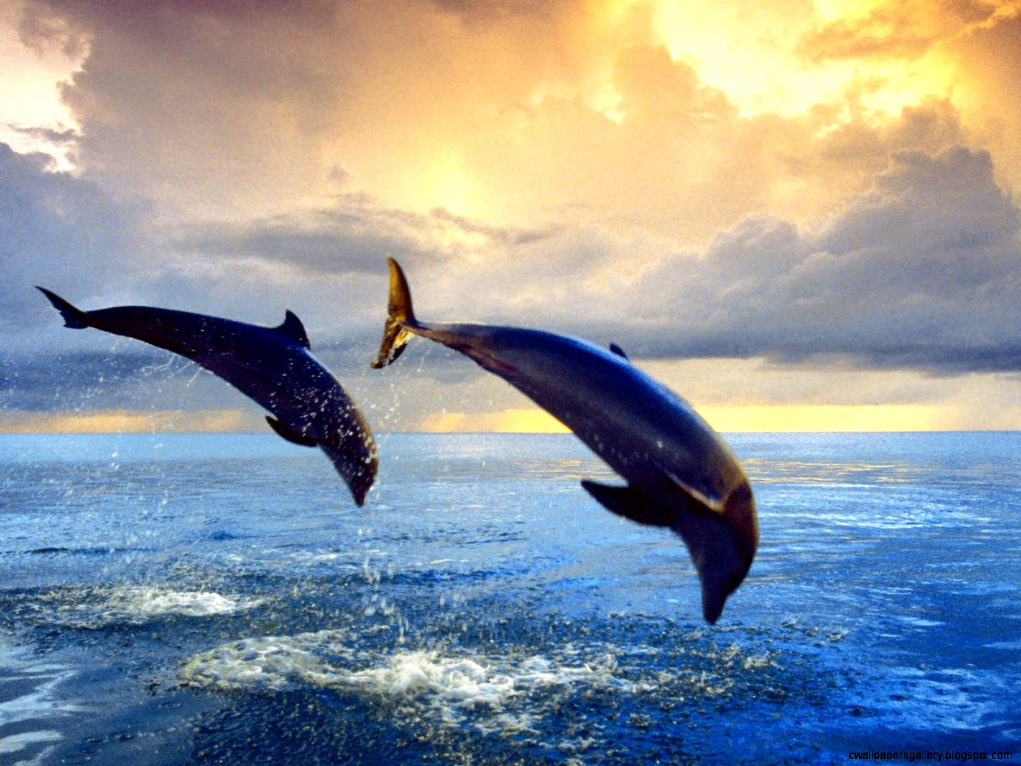 Bottlenose Dolphin Animals