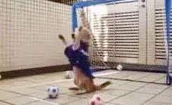 Amazing Dog Goalkeeper!