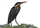 Periyar Birds Sanctuary