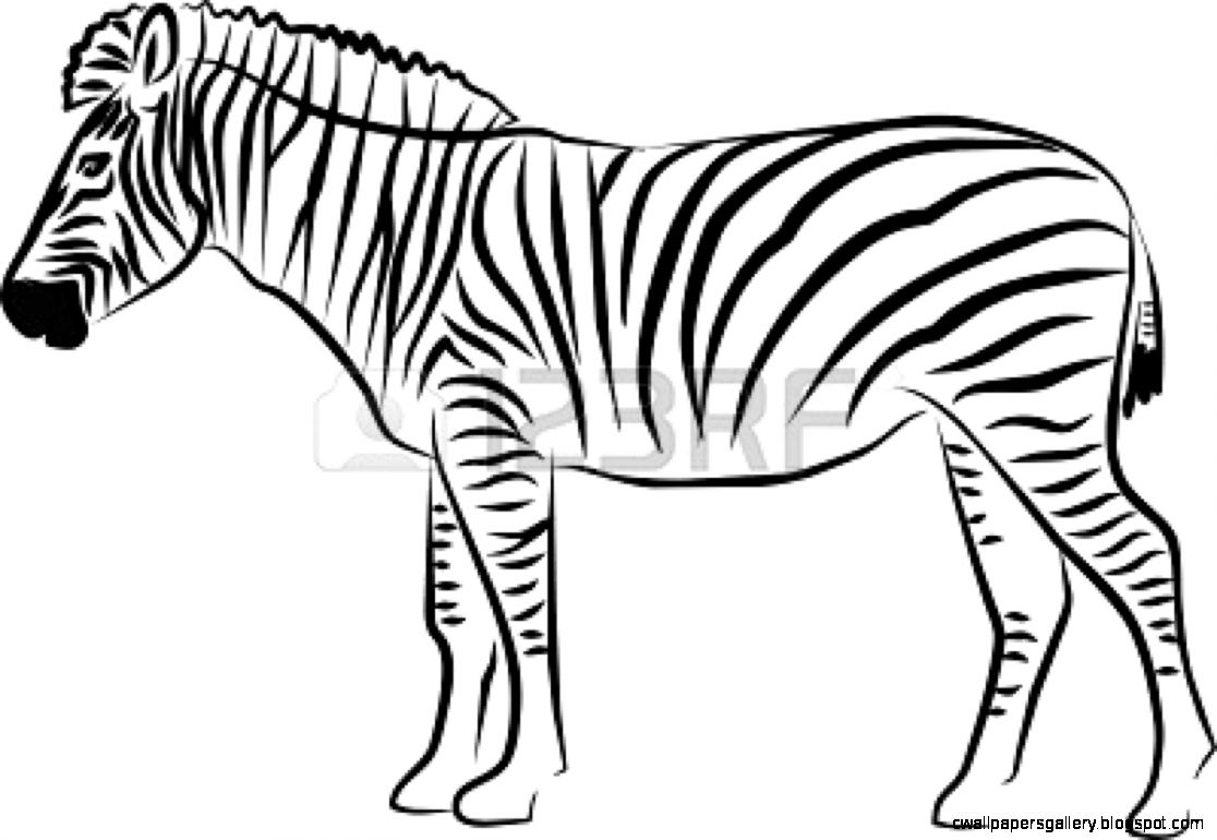 Black and White Zebra Clip Art