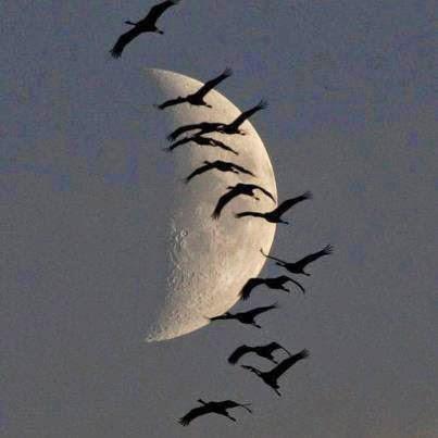 Tudo é possível para quem acredita na existência da lua.