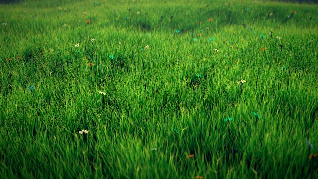 Hình nền đồng cỏ đẹp nhất