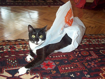 torbayla oynayan kedi
