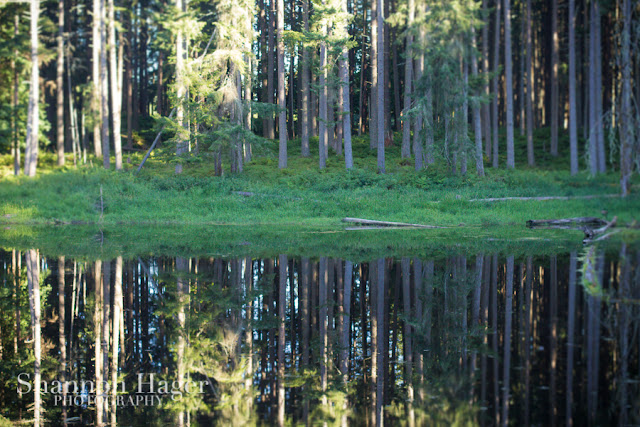 Shannon Hager Photography, Northwest Trek, Tree Reflections