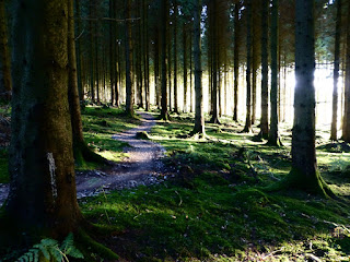 star wars forest of dean
