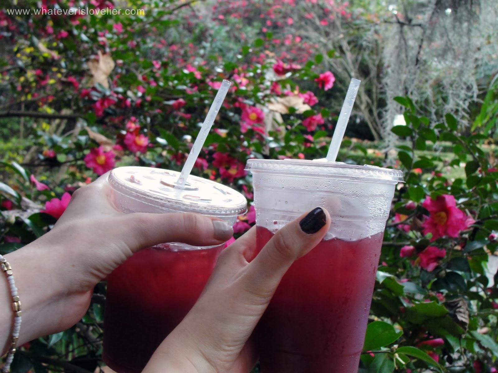 Magnolia Plantation and Gardens: Charleston, South Carolina