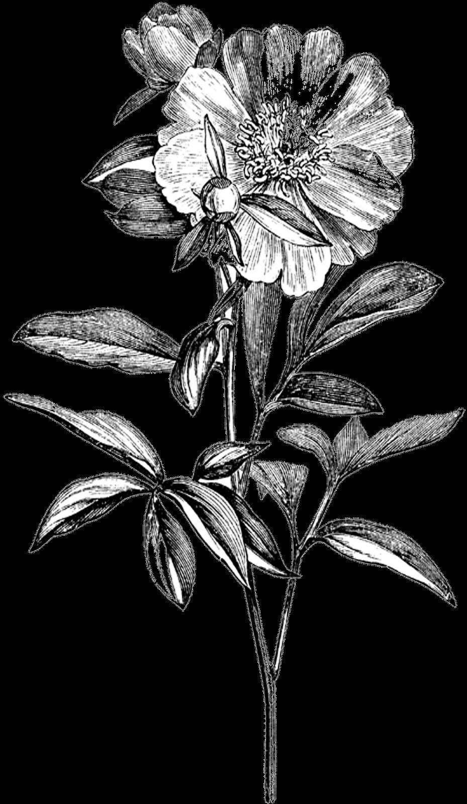 Transparent Black And White Flowers Tumblr