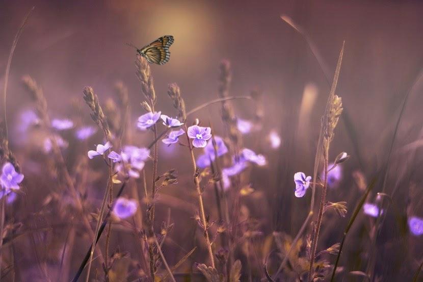 motyl na łące
