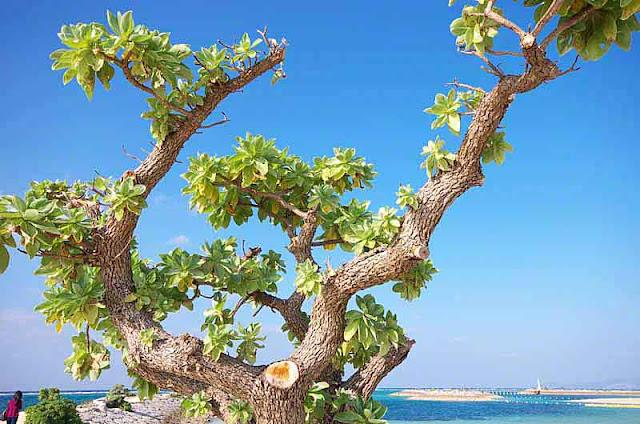 ocean, tree,island,blue sky