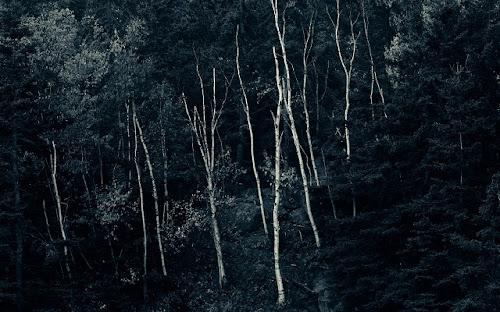Wallpaper Hutan Tropis Ukuran Besar