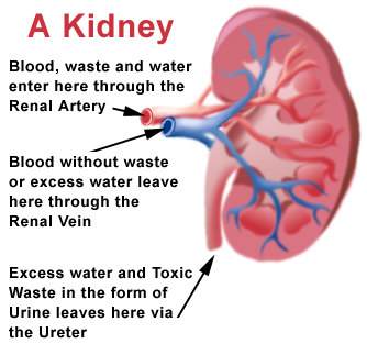disease of the colon vitamin