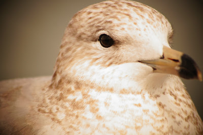 public domain picture of a bird
