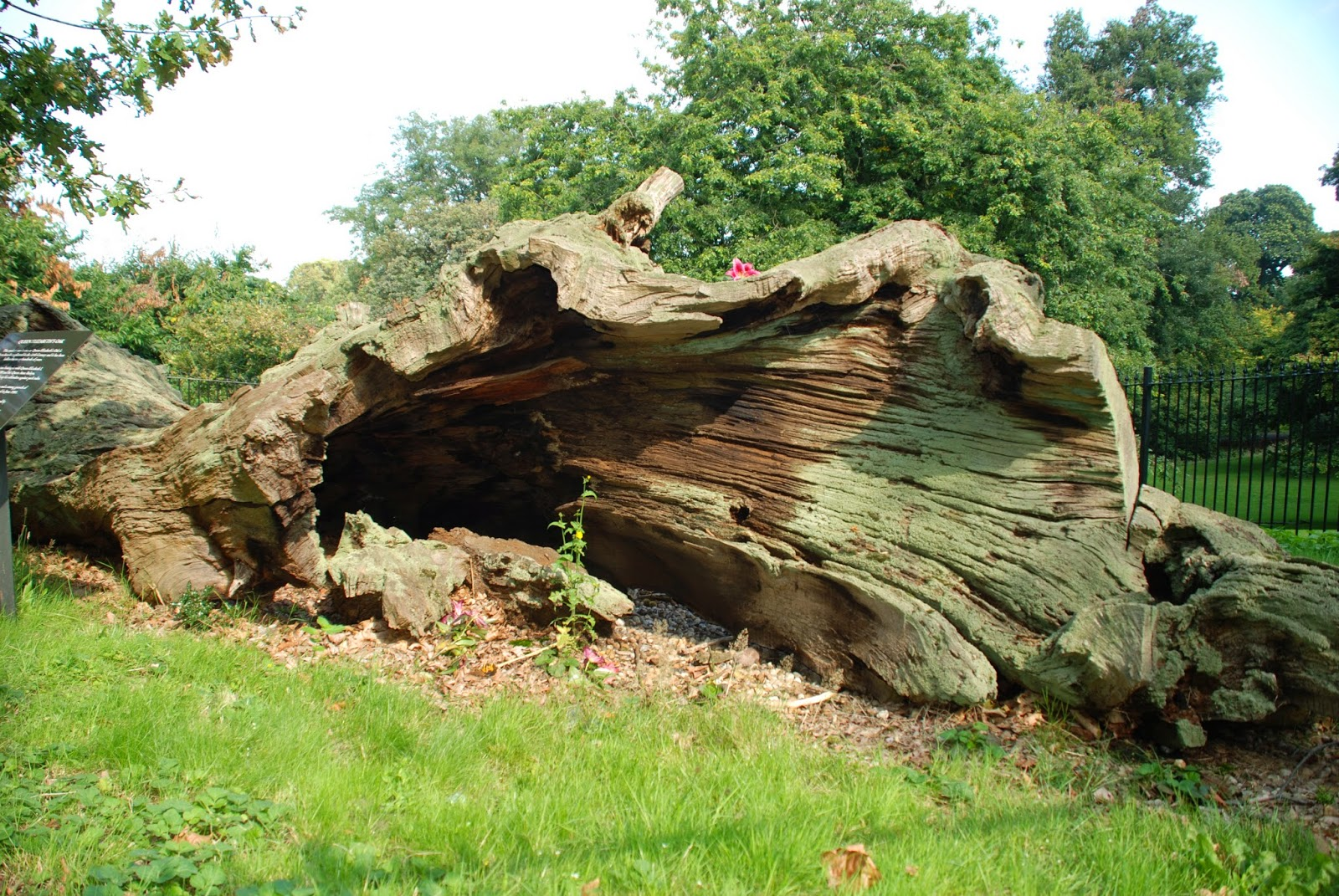 Queen Elizabeth's Oak Tree, Greenwich Park