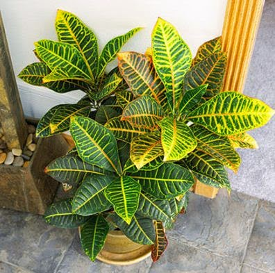 Best indoor plants suitable for your home for Best easy indoor plants