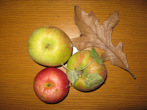 Minnesota Apples, Sept 2012