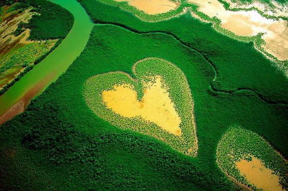 Srce kao prirodno čudo  14