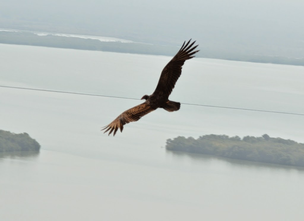 Cartagena Popa Hill Eagle