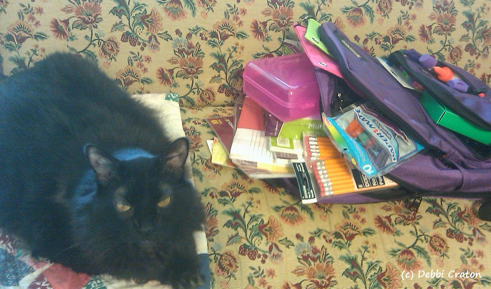 Guiness the Cat hijacks a photo of school supplies