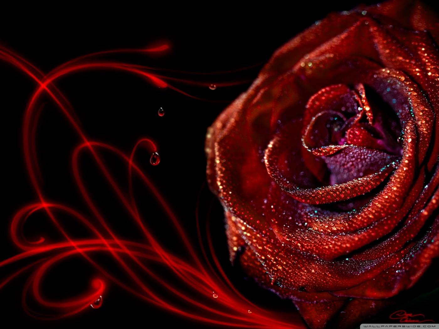 http://3.bp.blogspot.com/-BhuZeff8s30/T5LqZeh-nuI/AAAAAAAAAac/2xC5TuLCHbI/s1600/passion_by_diane_ozdamar-wallpaper-1400x1050.jpg
