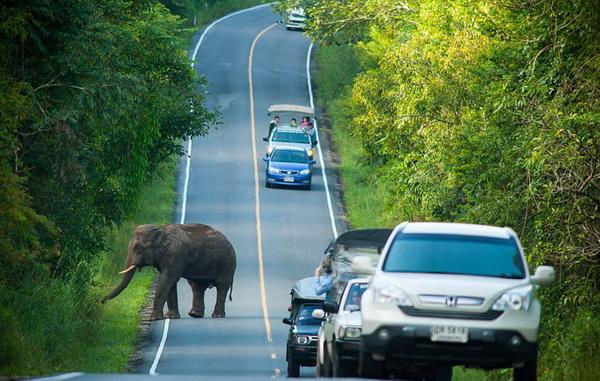 Слон уходит с дороге