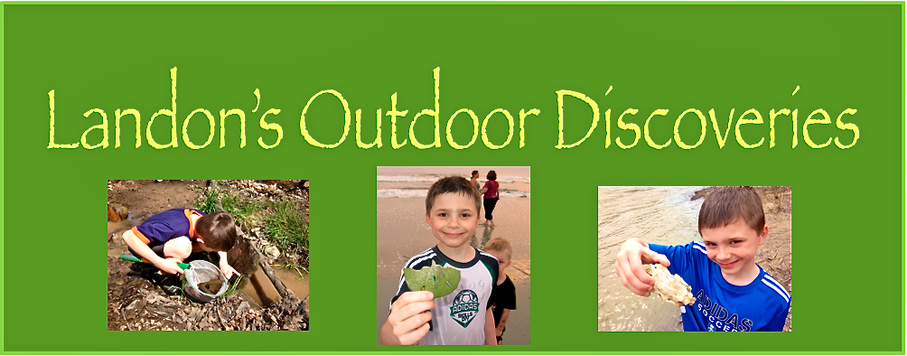 Landon's Outdoor Discoveries
